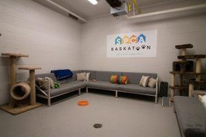 Saskatoon SPCA Social Room. Photo provided by Saskatoon SPCA