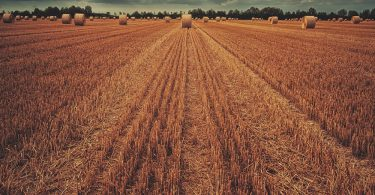 Predictive Analytics in Agriculture
